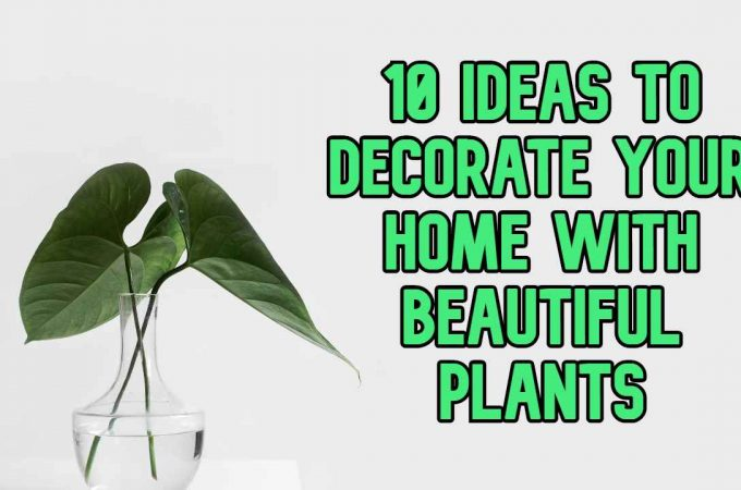 10 Ideas to Decorate Your Home With Beautiful Plants